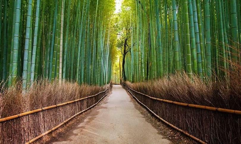 arashiyama bambu ormanı kyoto japonya