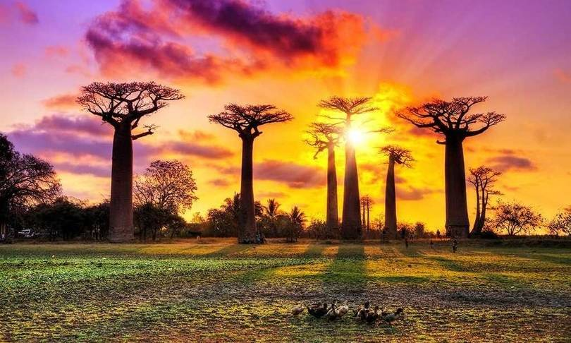 baobabs caddesi madagaskar