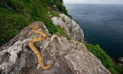 yılan adası brezilya