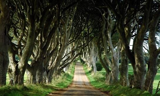dark hedges kuzey irlanda